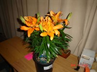 Asiatic Lily 002.JPG