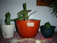 Garden and house plants 004.JPG