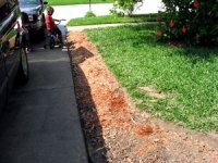tn_New Flower Beds 033.JPG
