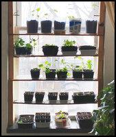 Temporary window shelves