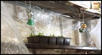 Existing shelf seedlings