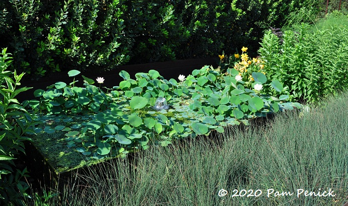 01_Lotus_pond-1.jpg