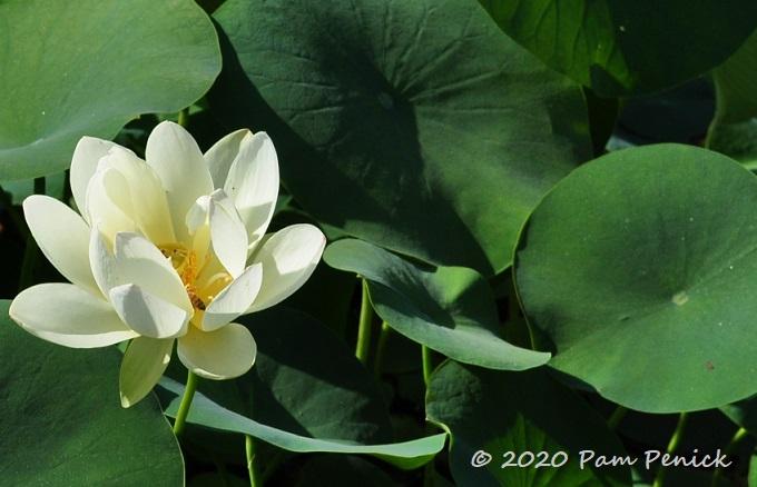 02_Lotus-1.jpg