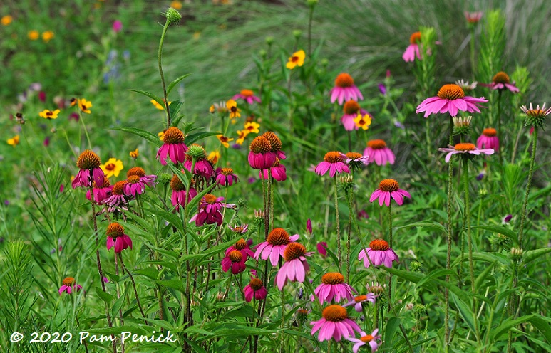 07_Purple_coneflowers-1.jpg