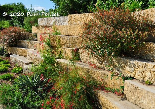 09_Cuphea_Firecracker_fern_Stone_wall-1.jpg