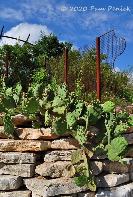 15_Wavy_fence_Prickly_pear-1.jpg