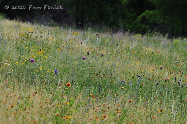 15_Wildflowers_meadow.jpg