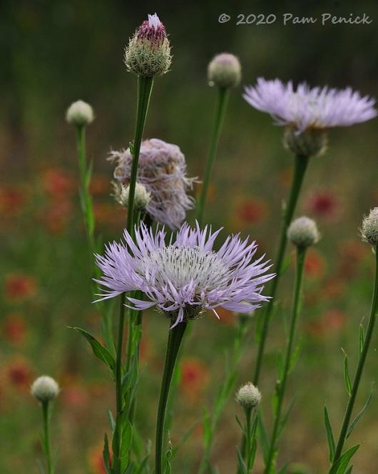 18_Lavender_flower-1.jpg