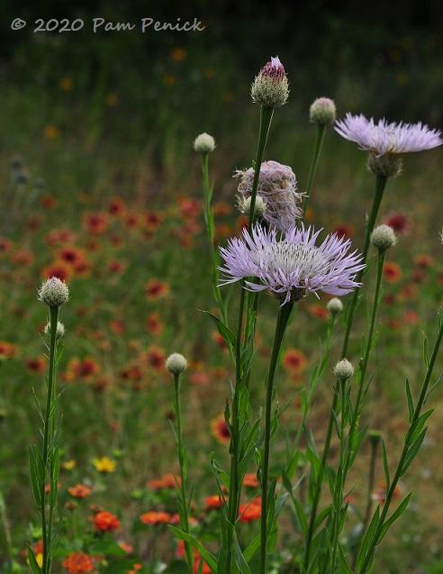 19_Lavender_flower-1.jpg
