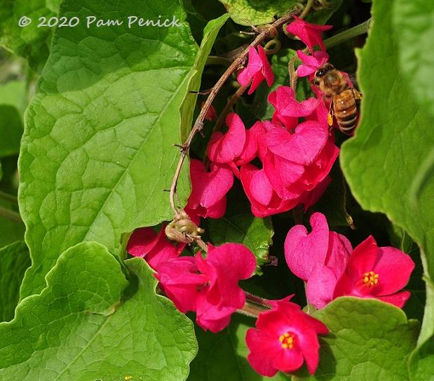 23_Queens_wreath_Bee-1.jpg