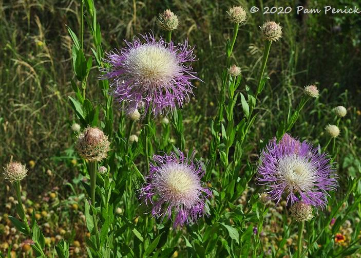 27_American_basket_flowers.jpg