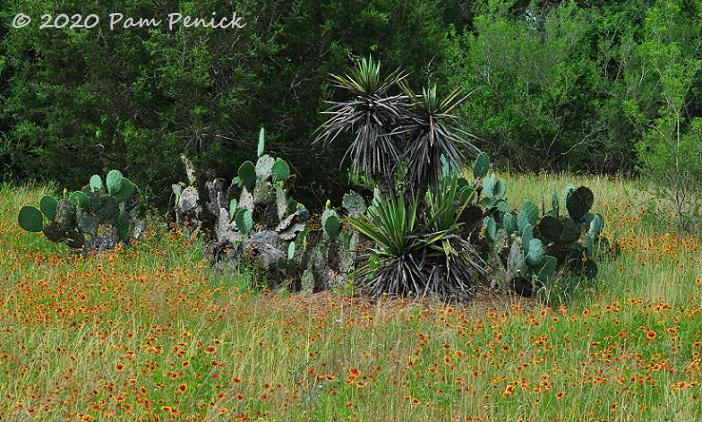 28_Yucca_Opuntia_Firewheel-1.jpg