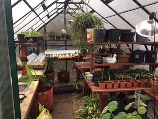 greenhouse6.jpg