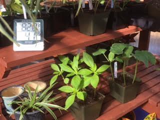 greenhouse8.jpg