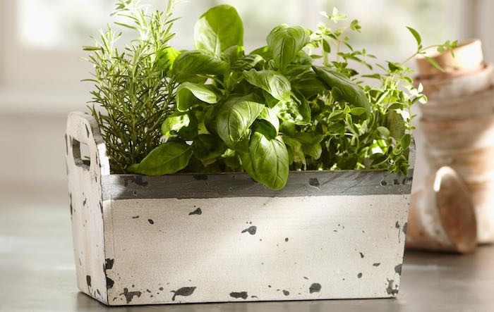 Herbs-grown-in-pots-indoors-700.jpg