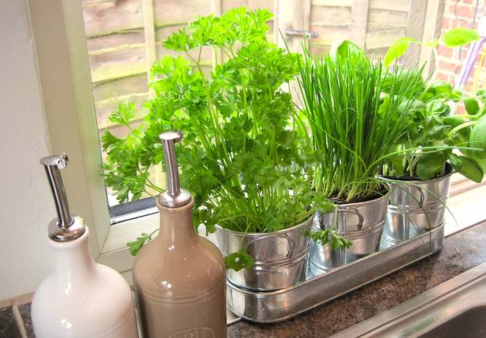 Herbs-windowsill-700.jpg