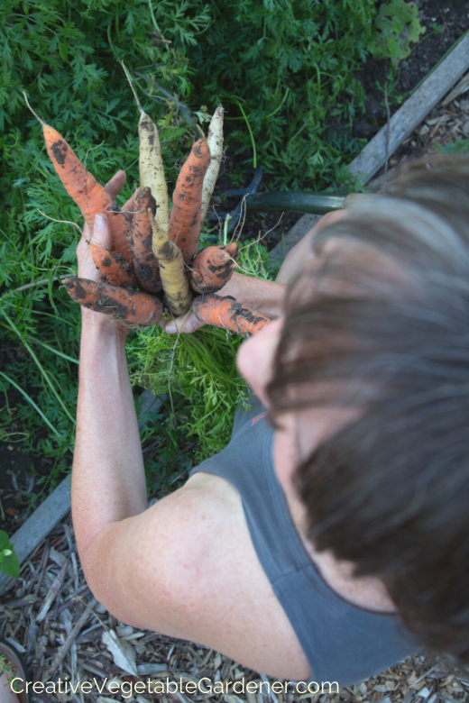 how-to-grow-carrots.png
