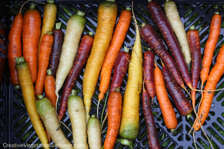 how-to-grow-organic-carrots.png
