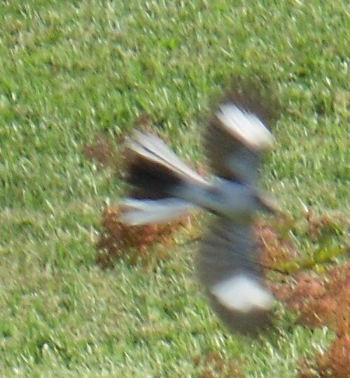 meanbird.jpg