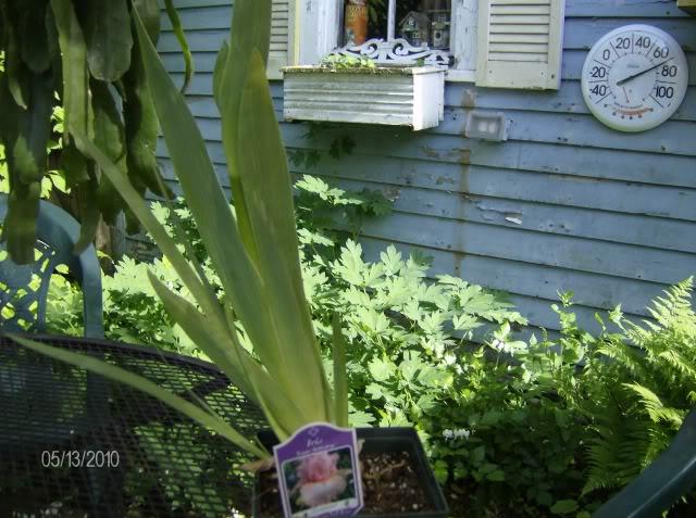 newplants001.jpg