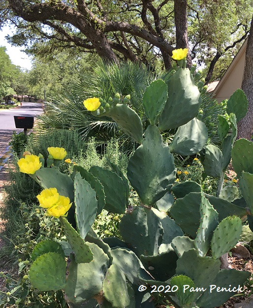 Old_Mexico_prickly_pear_1-1.jpg