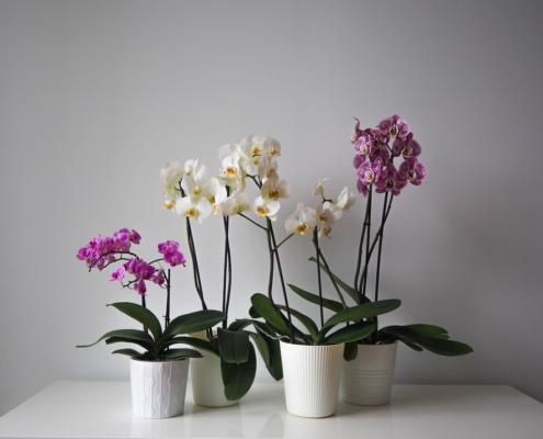 Orchid-pots-495x400.jpg