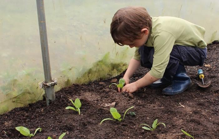 Planting-seedligs-Thomas-700.jpg