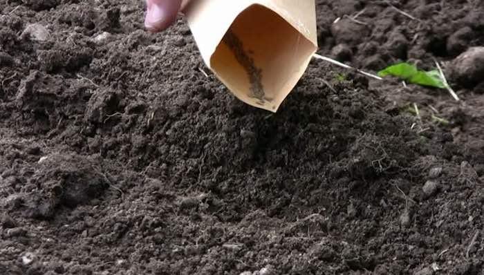Sowing-carrot-seed.jpg