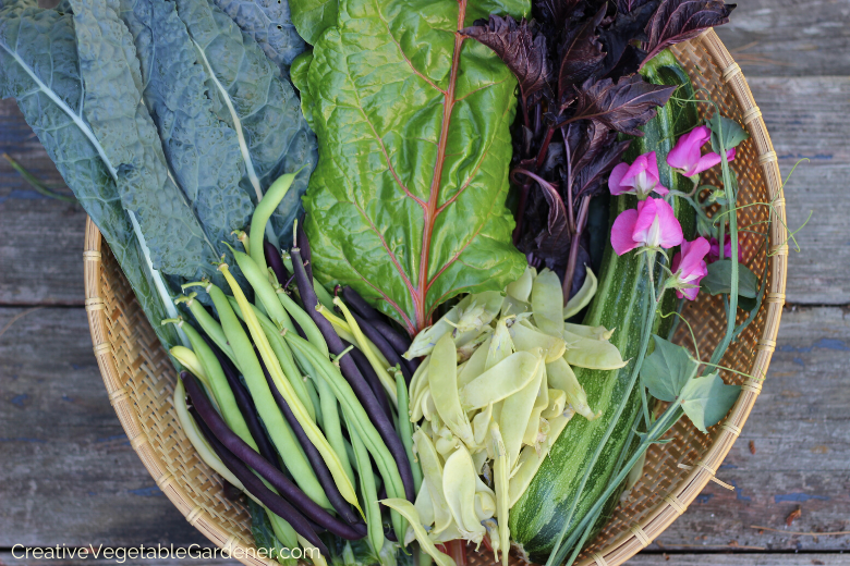 spring-planted-vegetables-in-the-garden.png