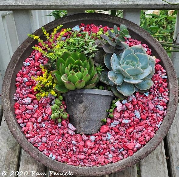Succulent_dish-1.jpg