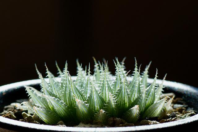 Thesucculentworld.jpg