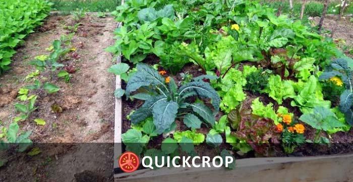 Vegetable-garden-2-header.jpg