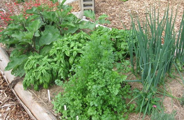 Vegetable-Garden-Planting.jpg